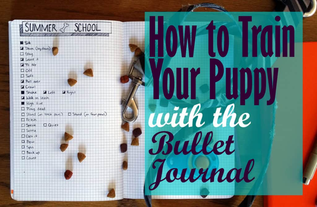 How to Train your Puppy using the Bullet Journal | Littlecoffeefox.com