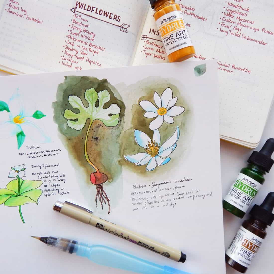 Several watercolor sketches of plants in a journal.