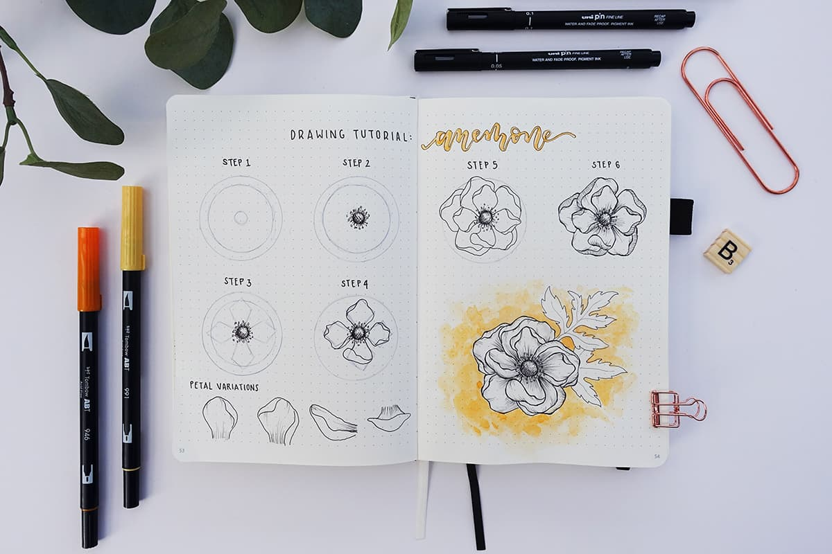 flower drawing tutorial  how to draw an anemone flower